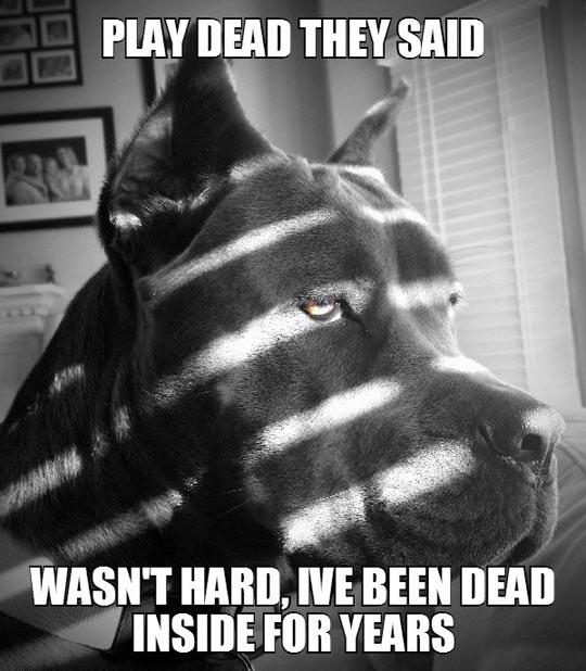 funny-dog-sad-face-play-dead
